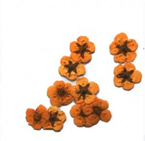картинка Сухоцветы для дизайна 29 магазин Gumla.ru являющийся официальным дистрибьютором в России