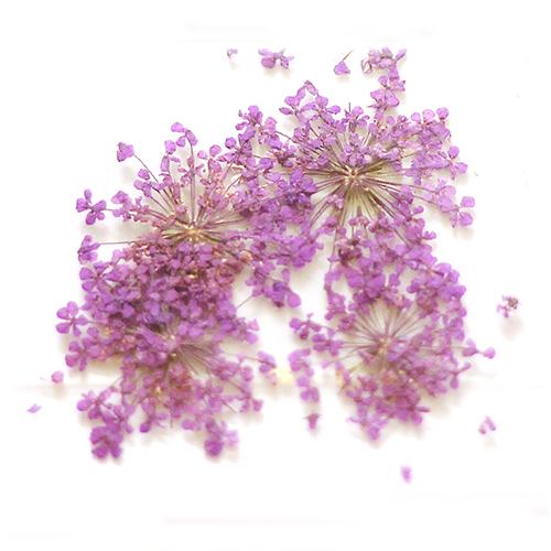 картинка Сухоцветы для дизайна 18 от магазина Gumla.ru