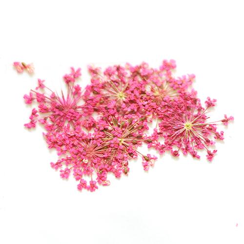 картинка Сухоцветы для дизайна 23 от магазина Gumla.ru
