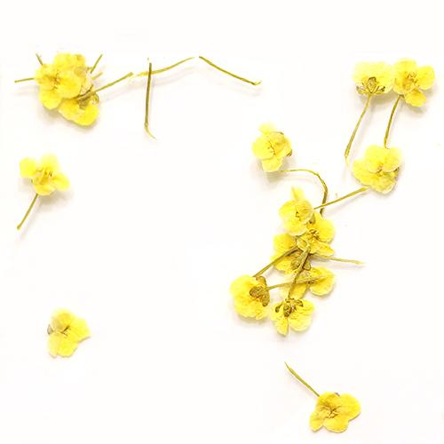 картинка Сухоцветы для дизайна 14 от магазина Gumla.ru