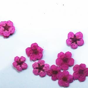 картинка Сухоцветы для дизайна 11 магазин Gumla.ru являющийся официальным дистрибьютором в России