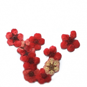 картинка Сухоцветы для дизайна 1 магазин Gumla.ru являющийся официальным дистрибьютором в России