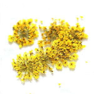 картинка Сухоцветы для дизайна 22 магазин Gumla.ru являющийся официальным дистрибьютором в России