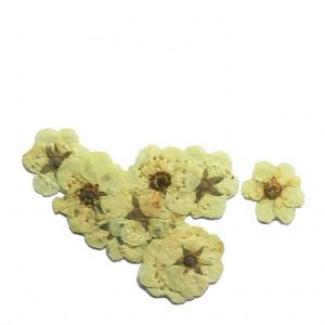 картинка Сухоцветы для дизайна 4 магазин Gumla.ru являющийся официальным дистрибьютором в России