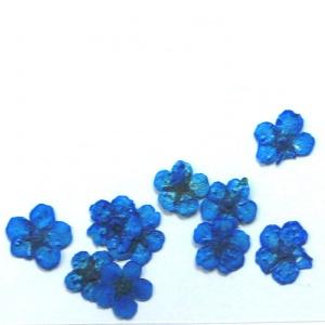 картинка Сухоцветы для дизайна 7 магазин Gumla.ru являющийся официальным дистрибьютором в России