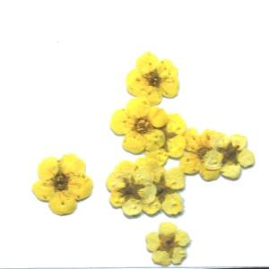 картинка Сухоцветы для дизайна 5 магазин Gumla.ru являющийся официальным дистрибьютором в России