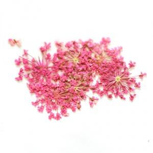 картинка Сухоцветы для дизайна 23 магазин Gumla.ru являющийся официальным дистрибьютором в России