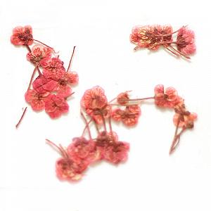 картинка Сухоцветы для дизайна 09 магазин Gumla.ru являющийся официальным дистрибьютором в России